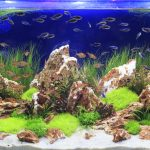 Is Water Softener Water Safe For Aquariums