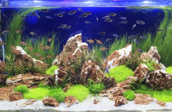 Is Water Softener Water Safe For Aquariums?